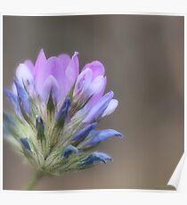 Fiore di campo Poster
