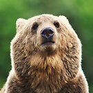 Grizzly portrait by Alan Mattison