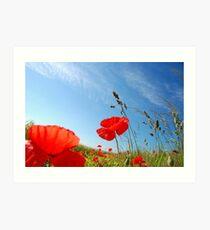 Poppies. Art Print