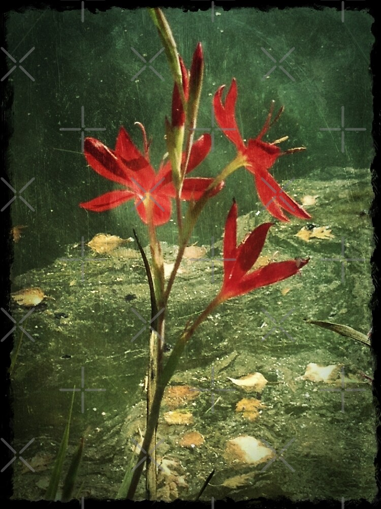 Red Flower by Deborah McGrath