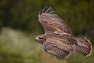 Flight of the Buzzard by Val Saxby
