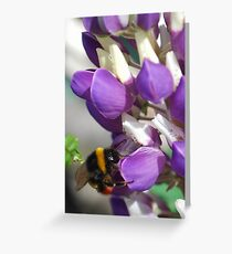 Bee on Blue Lupin Greeting Card