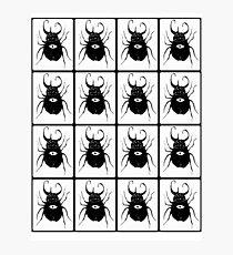 Beetles  Photographic Print