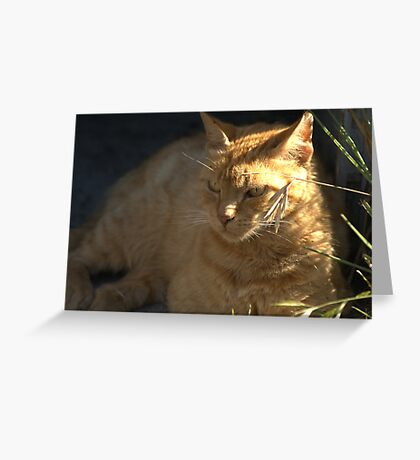 Ginger Megs Greeting Card