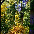"""""""Sierra Forest"""" by Lynn Bawden"""