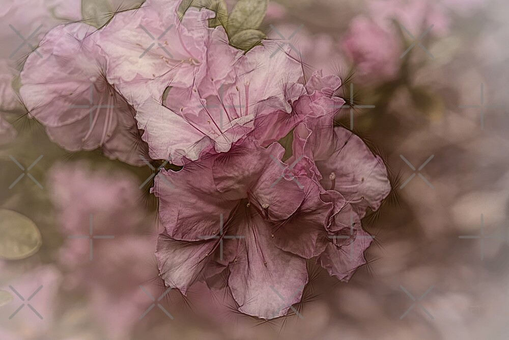 Dusky Pink Azalea by Elaine Teague