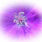 Lilac Blush by sarnia2