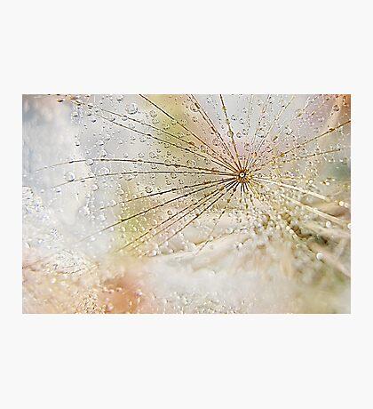 Diamonds and Pearls Photographic Print