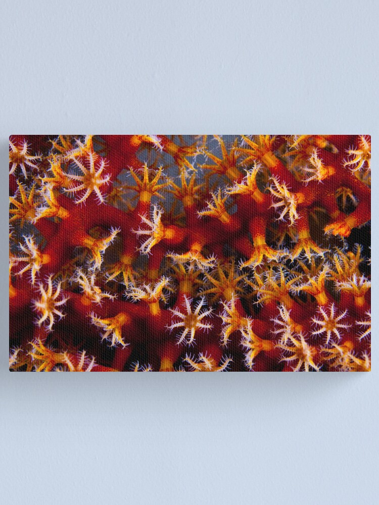 Alternate view of Animal flowers Canvas Print