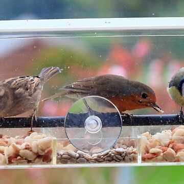 Window box feeder - image 3 by missmoneypenny