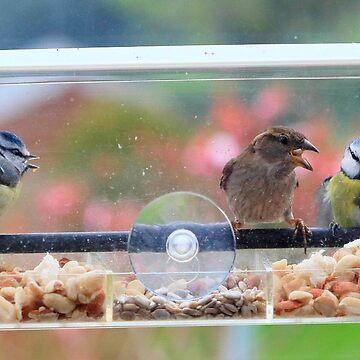 Window box feeder - image 4 by missmoneypenny