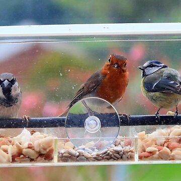 Window box feeder - image 6 by missmoneypenny