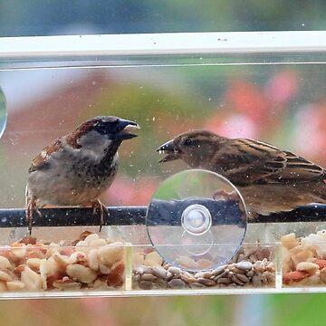 Window box feeder - image 7 by missmoneypenny