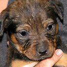Puppy. by PhoenixArt