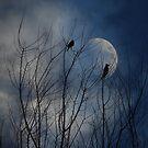 Misty Blue Moonrise by Zoe Marlowe