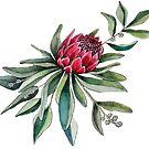 Protea watercolor by MagentaRose