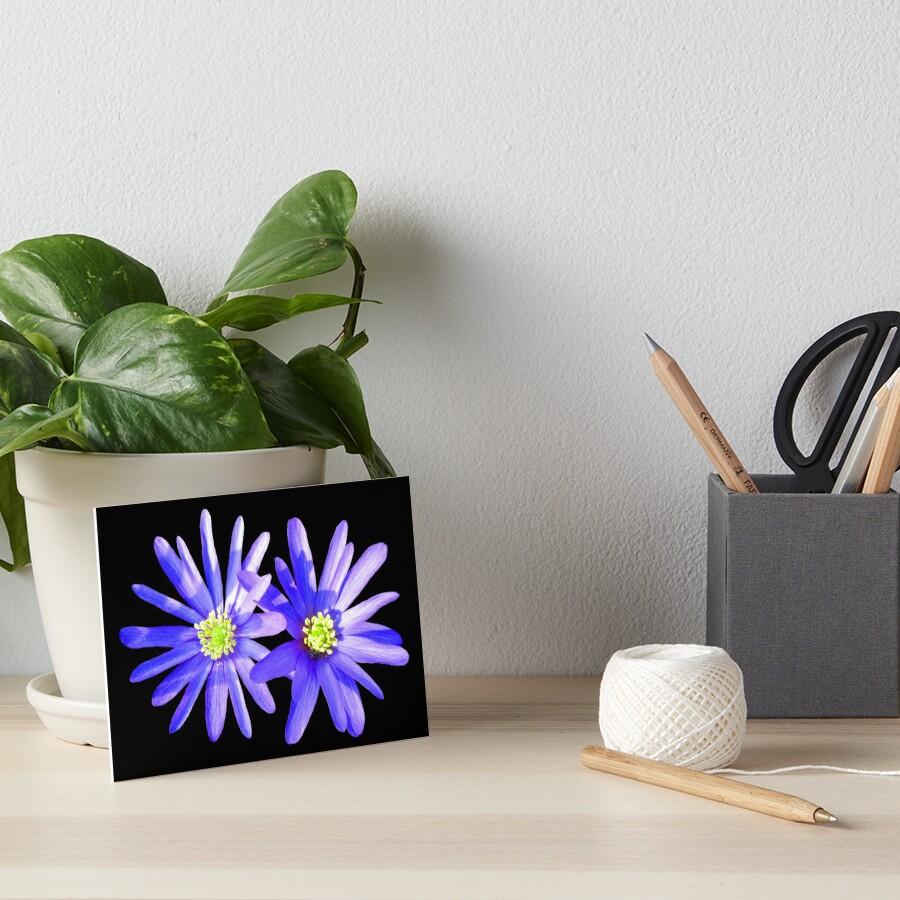 blaue Anemonen, Blumen, Blüten Galeriedruck
