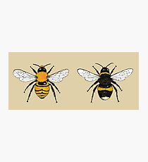 Bumblebee Illustrations Photographic Print