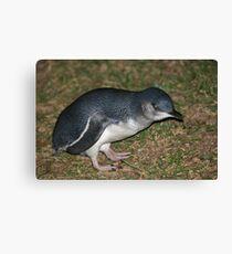 Little Penguin Canvas Print