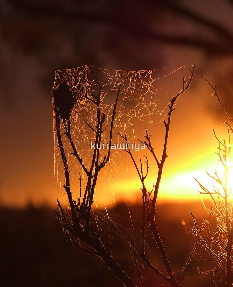 Saltbush Spiders... by Penny Kittel