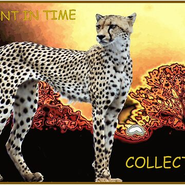 A MOMENT IN TIME - THE CHEETAH COLLECTION by mags