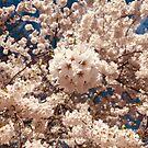 Flowers Like A Dream by MichalisStudio