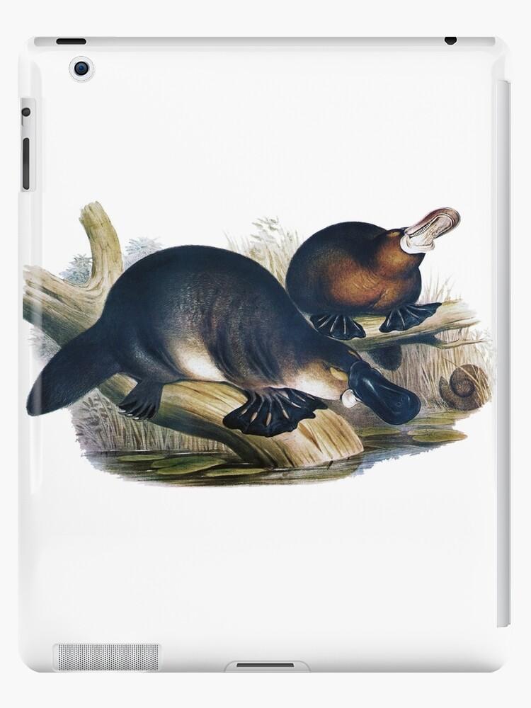 The platypus (Ornithorhynchus anatinus) painting by marmur