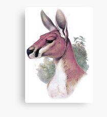 Red kangaroo portrait Canvas Print