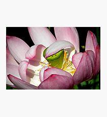 Lotus Vail Photographic Print