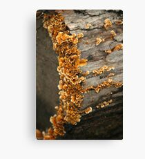 Frilly Fungi Canvas Print