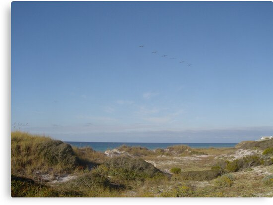Dunes, Pelicans and the Gulf of Mexico by May Lattanzio