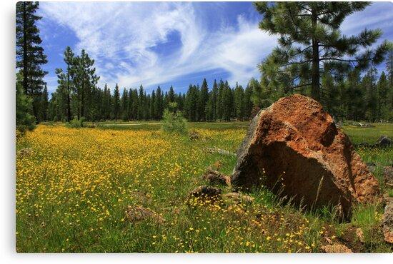 Springtime In Lassen County by James Eddy