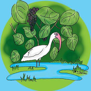 Florida Ibis Bird by Devine-Studios