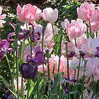 «Primavera - Tulipán Rosa» de agnessa38