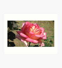 My Rose Art Print