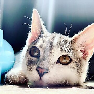 Charlie the kitten  by sanne424