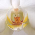 Into The Orchid by Michael Matthews