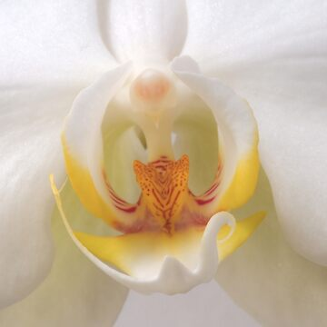 Into The Orchid by Michaelm43