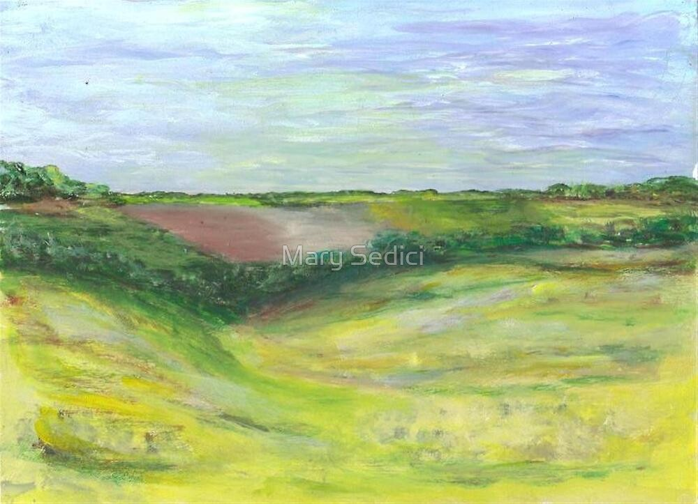 Canola Field  by Mary Sedici