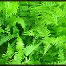 Ferns Oh So Pretty by Debbie Robbins