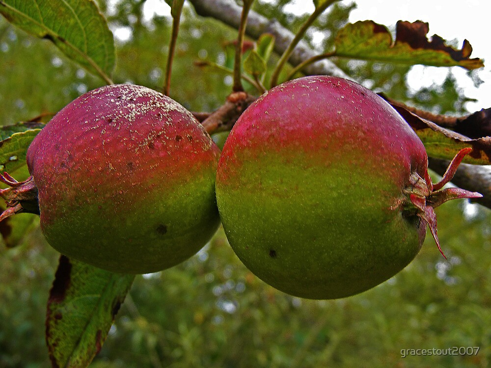IRISH APPLES by gracestout2007
