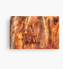 Scribbly Gum Bark Canvas Print