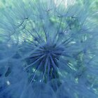 Dandelion delight by Photos - Pauline Wherrell