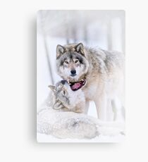 Timber Wolves Metal Print