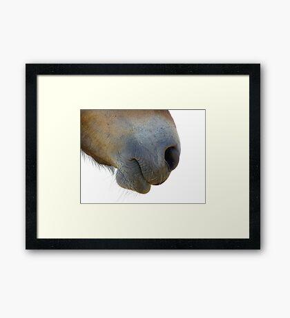 Gift Horse Framed Print