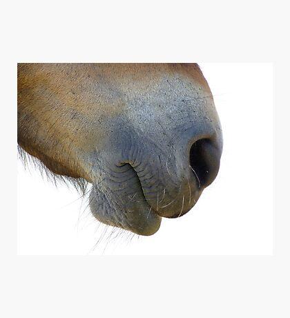 Gift Horse Photographic Print