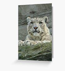 snow leopard Grußkarte
