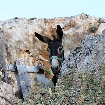 Greek Donkey by MikePaget