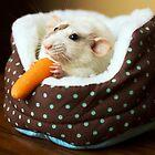 Echo's First Carrot by Laura Hoffmann