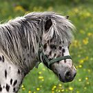Portrait of a Horse by Paul  Eden